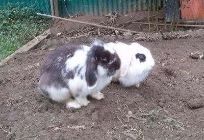 Conejos Gorliz - Abril 2014